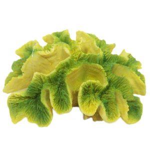Yellow / Green Ridge Coral