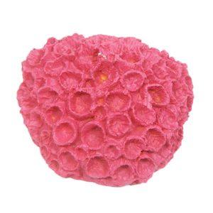 Mini Pink Sun Coral
