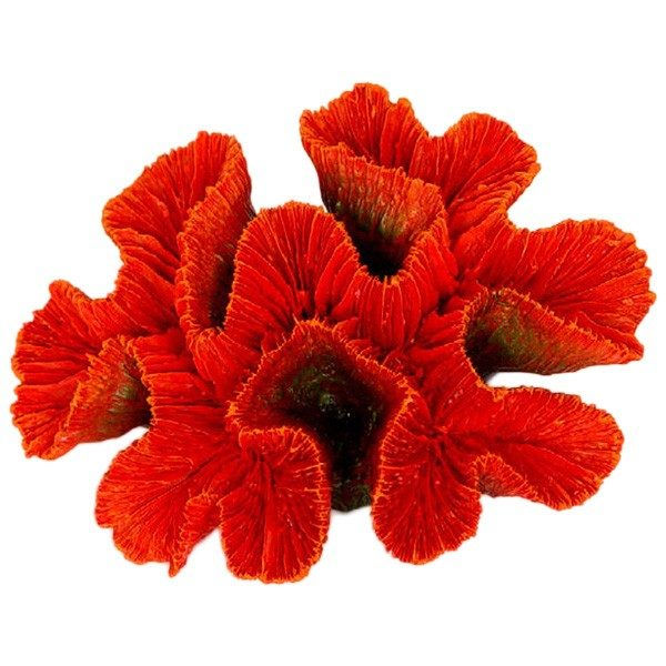 Red Ridge Coral