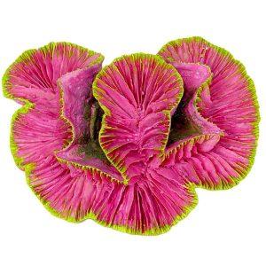 Pink Rose Coral