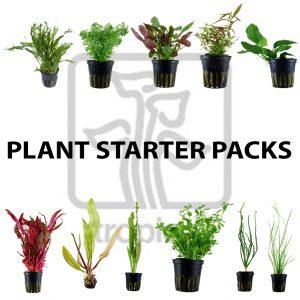 Plant Starter Packs
